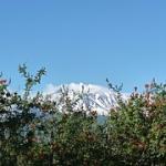 "L'Etna con la prima neve vista dalla pianura • <a style=""font-size:0.8em;"" href=""http://www.flickr.com/photos/43732391@N00/15456824509/"" target=""_blank"">View on Flickr</a>"