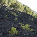 "GROTTA DEGLI ARCHI ETNA 2015 • <a style=""font-size:0.8em;"" href=""http://www.flickr.com/photos/92853686@N04/22302035515/"" target=""_blank"">View on Flickr</a>"