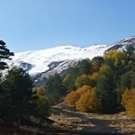 """Luci e colori dell'autunno a Piano Provenzana di Linguaglossa sull'Etna (2.000 metri) • <a style=""""font-size:0.8em;"""" href=""""http://www.flickr.com/photos/43732391@N00/15756601201/"""" target=""""_blank"""">View on Flickr</a>"""