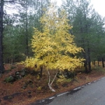 """Luci e colori dell'autunno a Piano Provenzana di Linguaglossa sull'Etna (2.000 metri) • <a style=""""font-size:0.8em;"""" href=""""http://www.flickr.com/photos/43732391@N00/15758520005/"""" target=""""_blank"""">View on Flickr</a>"""