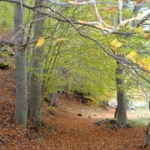 """I colori dell'autunno nella Valle del Bove-Etna • <a style=""""font-size:0.8em;"""" href=""""http://www.flickr.com/photos/33641282@N02/8200699498/"""" target=""""_blank"""">View on Flickr</a>"""